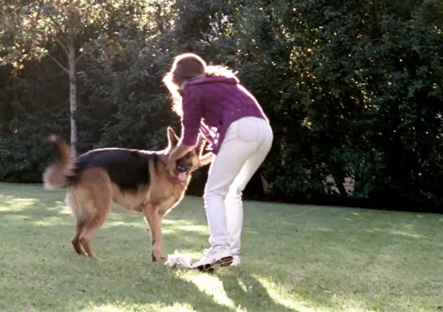 Video: Cytokine IL-31 - A Critical Mediator of Canine Atopic Skin Disease. Canine Atopic Dermatitis Immunotherapeutic is conditionally licensed. Efficacy and potency tests are in progress. Source: Zoetis Inc.