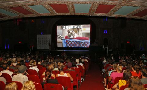 "Fans watch the premiere of ""Happiness Finds Grumpy Cat,"" a new BuzzFeed video sponsored by PetSmart and Friskies® at the Tampa Theatre on Tuesday, Aug. 4, 2015 in Tampa, Fla.  Friskies and PetSmart teamed up for this one-of-a-kind event to help promote the Friskies Variety Pack with Grumpy Cat packaging, and educate consumers that PetSmart is both cat-friendly and a cat resource. (Brian Blanco / AP Images for Friskies)"