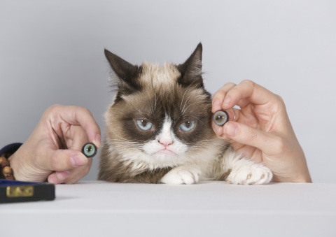 A disgruntled Grumpy Cat waits impatiently for a matching eye color to be found. (Photo: Business Wire)