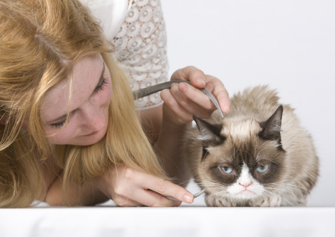 Grumpy Cat tolerates her sitting process. (Photo: Business Wire)