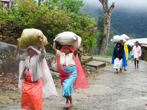 Tea pickers in Sri Lanka balancing bags of leaves they've harvested. Photo by Maisie Ganzler/Bon App ...