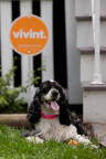 Vivint smart home technology can help keep pets both safe and healthy. (Photo: Business Wire)