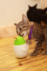 Adoptable Petfinder shelter kittens get their paws on the must-have holiday gift for purring pals this season, Friskies® Pull 'n Play™ - the latest innovation in cat snacks with the first-ever edible strings for cats. (Amy Sussman/AP Images for Friskies)