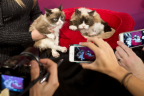 Grumpy Cat, left, poses next to Grumpy's animatronic figure at Madame Tussauds San Francisco on December 8, 2015 (Photo: Beck Diefenbach / Madame Tussauds)