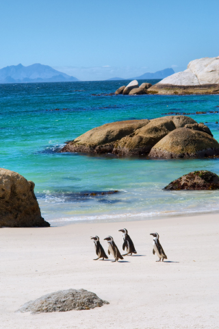Boulders Beach, Cape Town, South Africa - Photo Credit: PhotoSky, Shutterstock, Inc. (Photo: Business Wire)