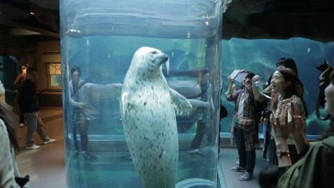 A cute seal swimming and playing inside a vertical tube - Asahiyama Zoo, Asahikawa, Hokkaido (Photo: Business Wire)