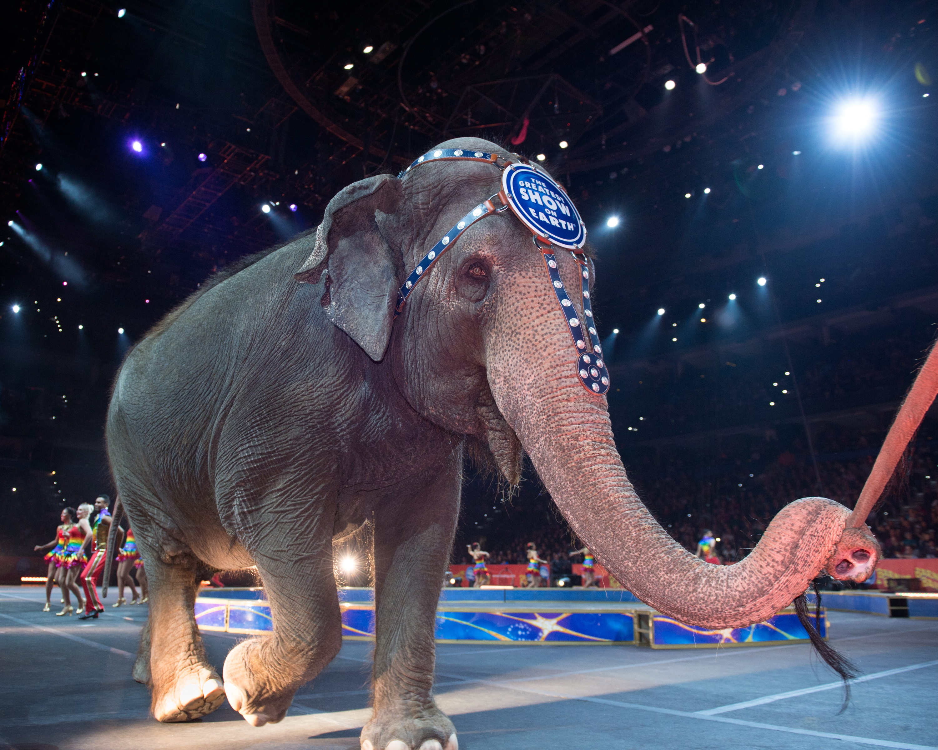 Families that want to see Ringling Bros. amazing elephants perform, like Karen (pictured),  one last time have an opportunity to do so prior to May 2016, before all elephants will be located at the Ringling Bros. Center for Elephant Conservation in Central Florida. (Photo: Feld Entertainment)