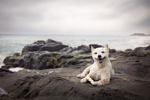 Roxy's Remedies Inc. is a new brand of Natural Grooming Products for Dogs with Sensitive Skin. www.roxysremedies.com (Photo: Business Wire)