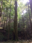 Finite Carbon and Molpus Woodlands Group Register Little Brimstone Forest Carbon Project (Photo: Business Wire)