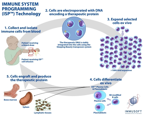 Immusoft's process for programming cells to treat disease. (Graphic: Business Wire)