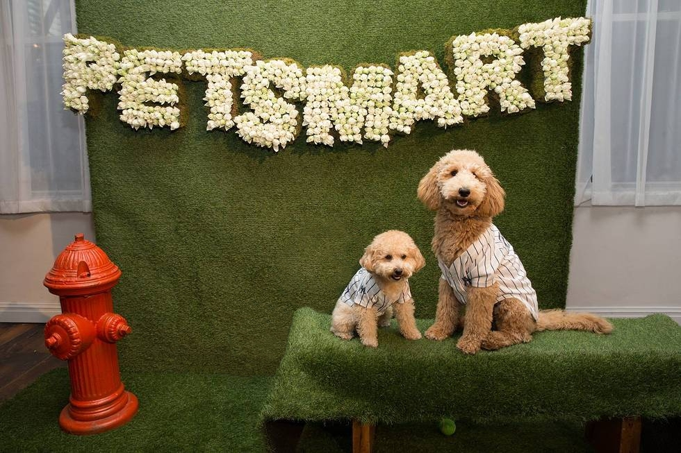petsmart easter bunny pictures 2020