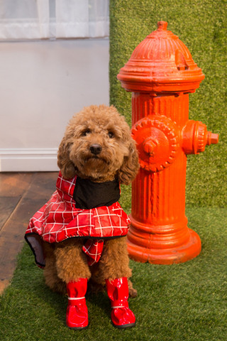 Spring into PetSmart on Saturday, April 9, noon - 4 p.m.at PetSmart stores nationwide for a Spring Gear Demo event featuring product demos, fittings and recommendations including a variety of stylish rain coats to make romping through puddles a blast. (Photo: Business Wire)