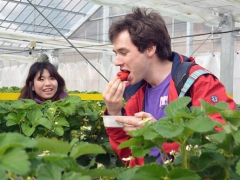 A student from University College London eating a strawberry made in Fukushima prefecture (Photo: Business Wire)