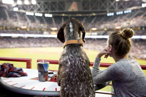 "Four-legged baseball fans like Scout can be a part of history as PetSmart, the Arizona Diamondbacks and Central Garden & Pet host ""Bark at the Park"" May 1 at Chase Field where the group is focused on setting a GUINNESS WORLD RECORD™ title for the most dogs attending a sporting event. The goal - 1,000! (Photo: Business Wire)"
