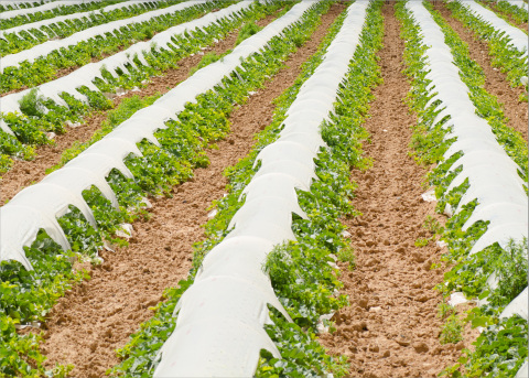 Thin agricultural film using Exceed™ XP performance polymers delivers tough and tear-resistant films that help farmers protect and preserve their crops and harvests. (Photo: Business Wire)