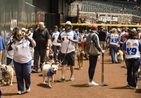 """Nearly a World Record! Hundreds of dogs took part in the pre-game """"Pup Parade"""" at Chase Field before the Diamondbacks vs. Rockies game in Phoenix on Sunday, May 1, 2016. Approximately 858 dogs attended the game, 142 dogs shy of the 1,000 dogs needed to set the GUINNESS WORLD RECORDS™ title for the Most Dogs Attending a Sporting Event. Through a collaboration between PetSmart and the Diamondbacks, Chase Field has been dubbed the most dog-friendly MLB stadium in the nation with season-long permanent dog-welcoming facilities. (Photo: Business Wire)"""