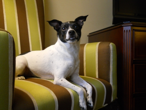 Marcus Hotels & Resorts welcomes pets this summer (Photo: Business Wire)