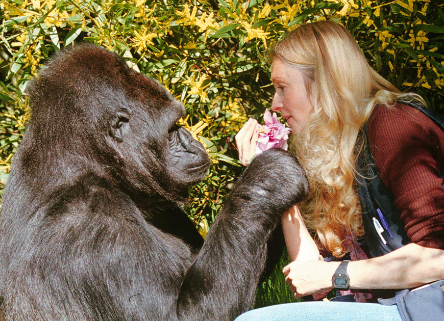Mom not charged in Cincinnati Zoo gorilla tragedy