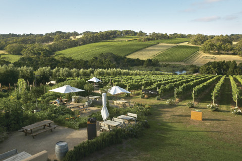 Montalto Winery and Olive Grove, Mornington Peninsula, Victoria (Photo: Business Wire)
