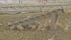 Perdue Farms Broll.