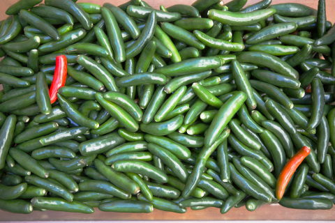 More than 40 Bronx community gardens grow the serrano peppers for Bronx Hot Sauce, JetBlue's newest BlueBud winner. (Photo: Business Wire)