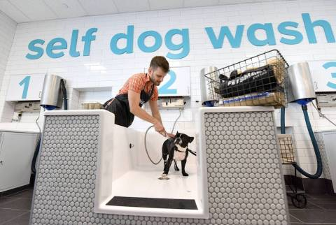 Instagram pet celebrity @oscarfrenchienyc gets a bath by his pet parent, Andre Falcao, in the self-serve dog wash at the new PetSmart® Pet Spa™, a first-of-its-kind concept store located in Oceanside, New York. The new store by North America's largest pet specialty retailer features a pet service focus with a unique, modern design and innovative elements aimed at offering an enhanced pet lifestyle customer experience. The self dog wash bays, a first at PetSmart, give pet parents an easy solution to bathe and bond with their pet without the mess of an at-home bath. Also included in the PetSmart Pet Spa is a coffee bar-lounge area with complimentary drinks and comfortable seating for pet parents while pets receive grooming services.  Pet parents can also choose from a wide variety of high-end pet essentials such as collars, beds, leashes and apparel and a large pet food collection focused on pinnacle natural nutrition – high-protein, grain-free, organic and raw food. (Photo: Business Wire)