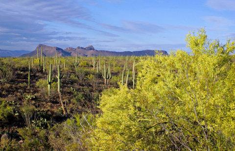 Saguaro National Park, Arizona (Photo: Business Wire)