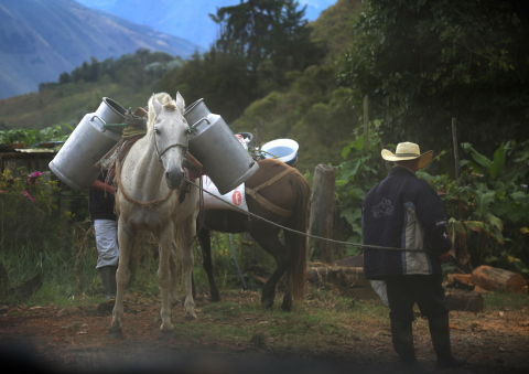 Colombian dairy farmers make the most of limited resources to sell their milk. (Photo: Business Wire)