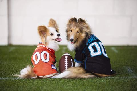 Football season is days away and puppy football fans can get in on the game day fun with PetSmart's new Tailgating Collection featuring jerseys and other apparel, themed toys and treats. Whether you and your pup are tailgating or hosting a game day gathering, PetSmart's full collection of licensed apparel, collars, leashes and toys will allow you and your pets to display your team spirit - and PetSmart wants to see it! Between 9/6 and 9/19, submit a photo of your pet in their favorite team's apparel or showing their team spirit with Pet Expressions and fans will vote to decide the winner.