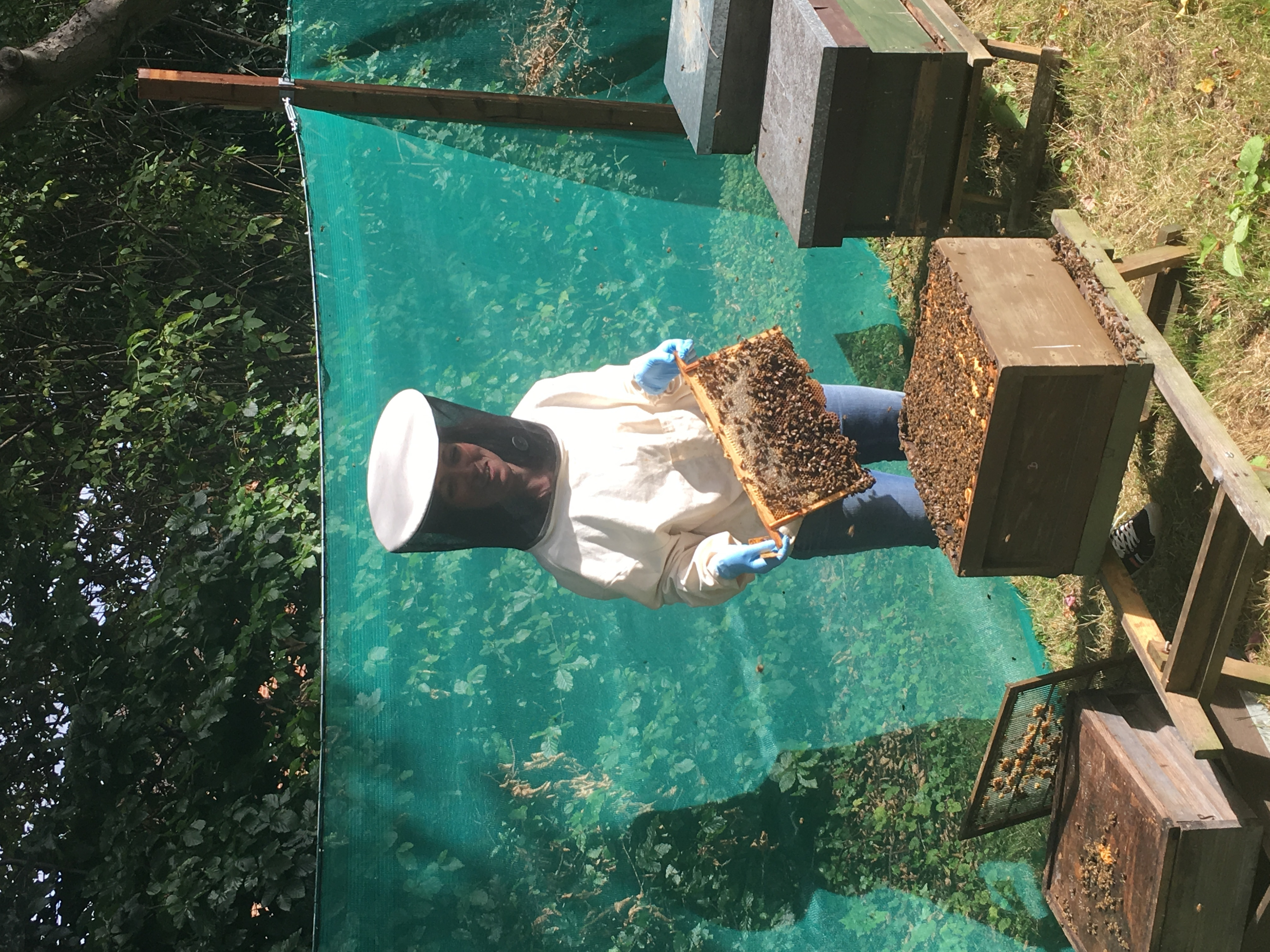 Smithers Viscient Names New Study Director, Bolsters Bee Testing ...