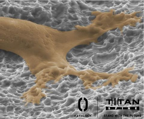 A human stem cell proliferating on the nanoLOCK® surface. (Photo: Business Wire)