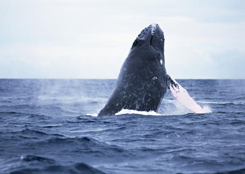 Whale watching (Photo: Business Wire)