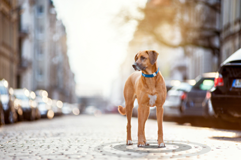 Orange Business Services provides the connectivity for Tractive's devices that keep pets safe. Source: Tractive.