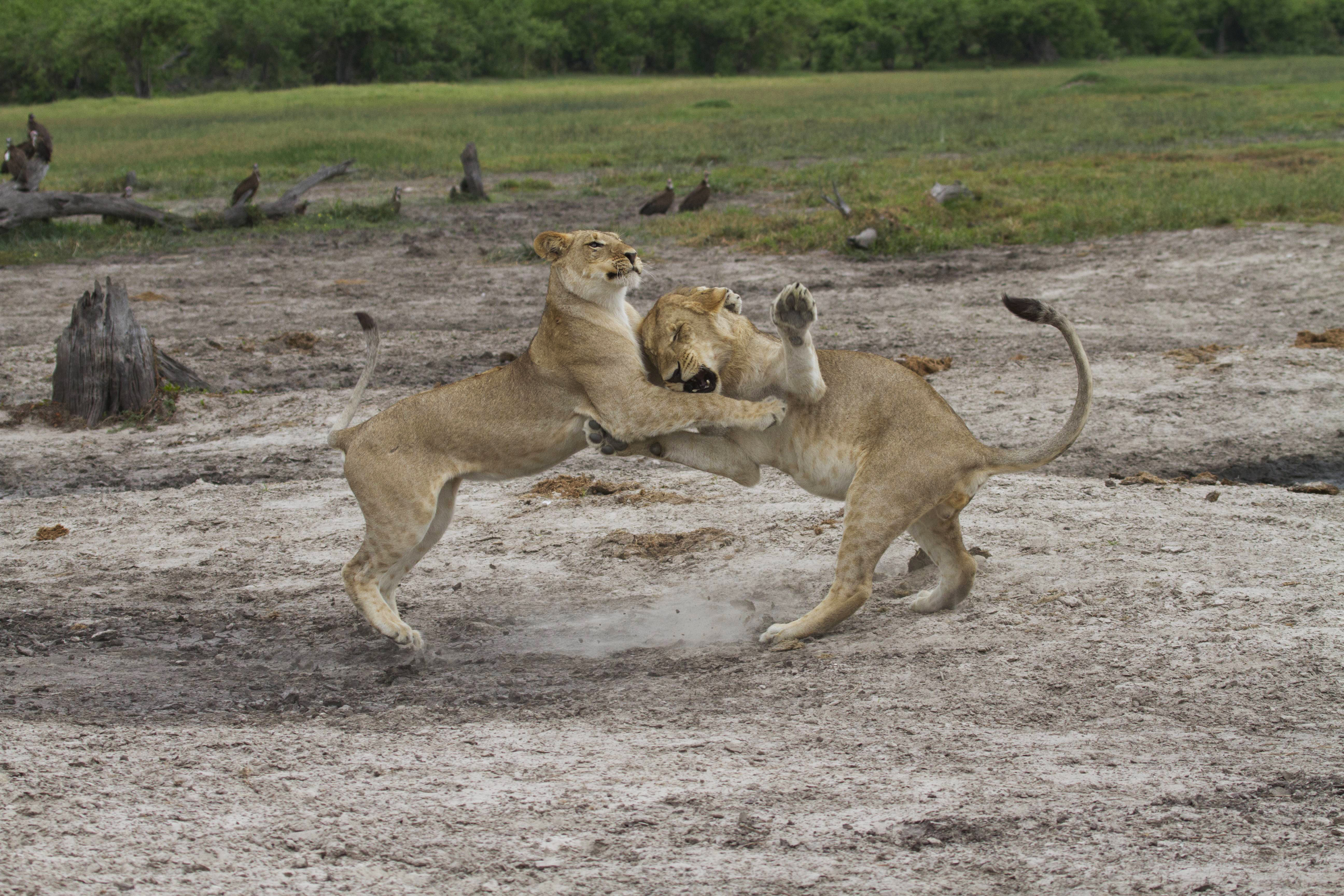 Nat Geo WILD Redefines Wildlife Storytelling with Epic