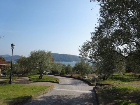 Olive grove on Shodoshima (Photo: Business Wire)