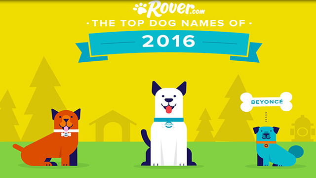 Rover.com reveals the most popular dog names of 2016; fourth annual report found Americans were inspired by everything from Pokémon to politics