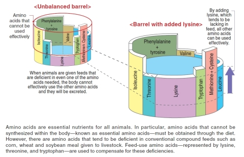 """*3 The """"Barrel Theory"""" of amino acids (Graphic: Business Wire)"""