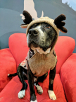Rufus of Michelson Found Animals Adopt & Shop in his ugly Christmas sweater. (Photo: Business Wire)