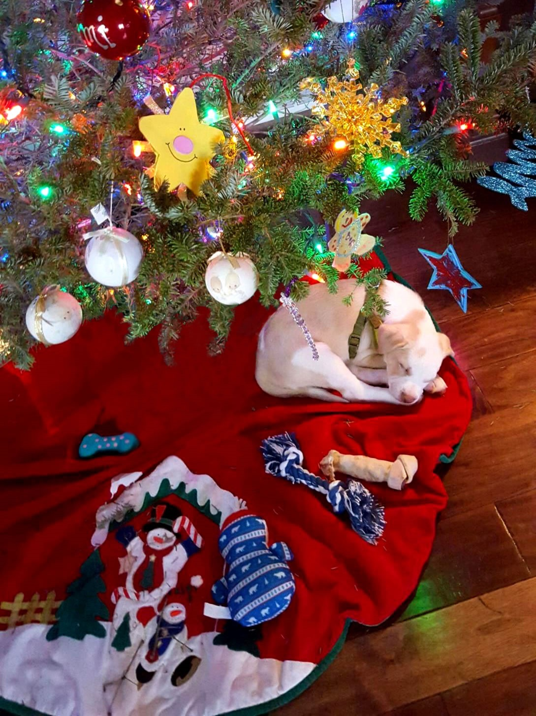 Lots of Dogs Arrived as Holiday Gifts this Season, and PetSmart ...