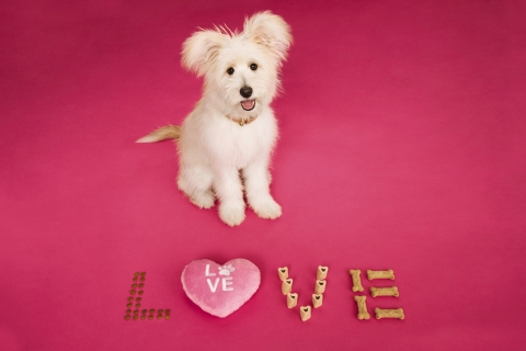 PetSmart encourages pet parents to treat their pets – furry and scaly – on Valentine's Day, and in the spirit of love, the retailer has enhanced its Valentine's Day collection to include more ways for pet parents to show love and celebrate their pets this Valentine's Day and all year long. (Photo: Business Wire)