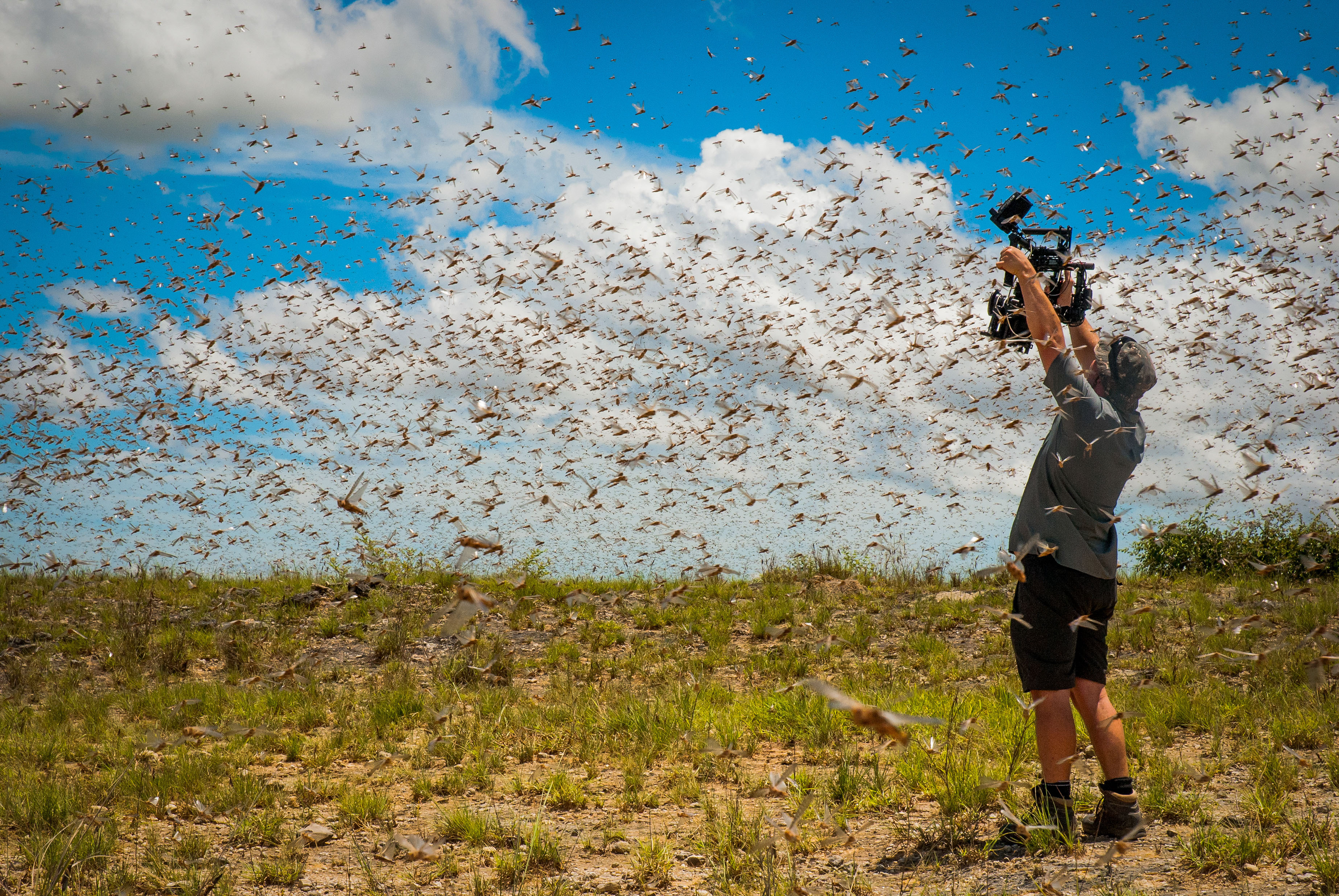 DISH will deliver live in 4K Ultra HD the highly-anticipated natural history series, Planet Earth II. (Photo: Business Wire)