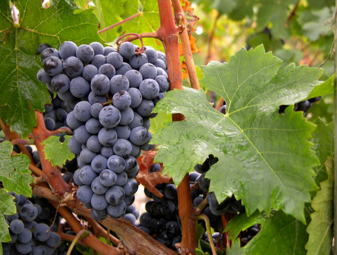PadillaCRT Selected as Bordeaux Wines U.S. Public Relations Agency of Record (Photo: CIVB).