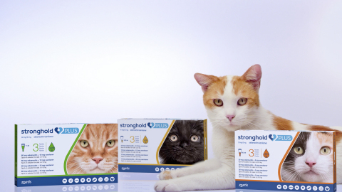 The European Commission has granted Zoetis Inc. a license for Stronghold® Plus (selamectin/sarolaner), a topical combination of parasiticides that treats ticks, fleas, ear mites, lice and gastrointestinal nematodes and prevents heartworm disease in cats. (Photo: Zoetis)