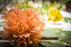 Blaschka Glass Flowers (Photo: President & Fellows Harvard College)