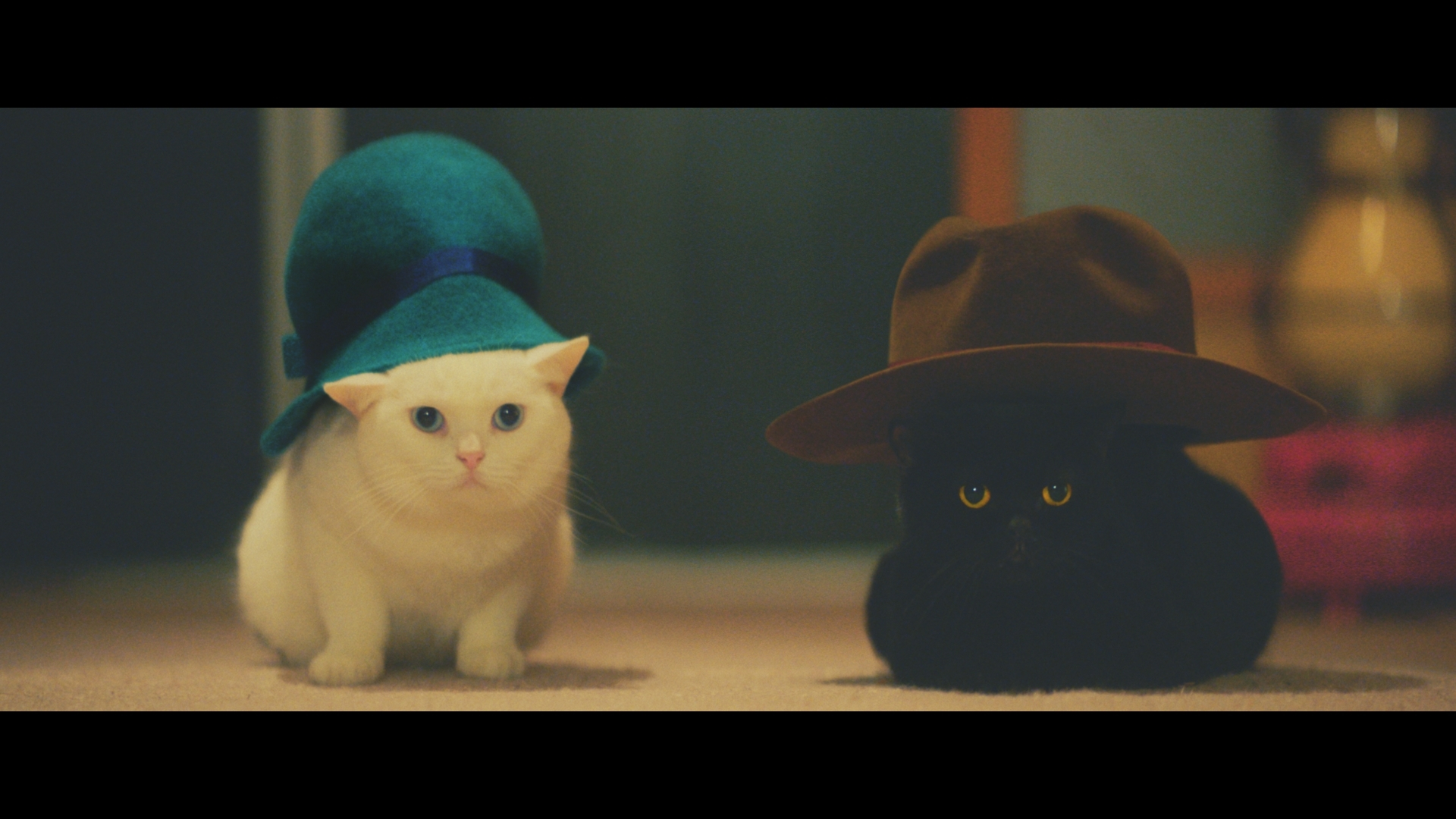 """Cats studying a fictional """"U-nyan"""" (U-Meow) correspondence course set up for cats (Photo: Business Wire)"""