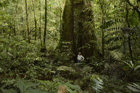 Fabián López, Cuenca regional coordinator, Nature and Culture International (NCI), surveys the tropical forest under a towering ficus tree. NCI, founded in Del Mar, Calif., helped Ecuador establish the 6.3-million-acre Pastaza Ecological Sustainable Use Area in the Ecuadorian Amazon Forest. The preserve, which is about the size of the state of Maryland, is one of the most biodiverse areas on Earth. The announcement of the preserve was the culmination of three years of collaboration by provincial and local governments in Ecuador, indigenous communities and NCI. (Photo: Business Wire)