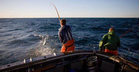 In keeping with Whole Foods Market's new requirements for canned tuna, fishermen use a pole-and-line method to catch fish one at a time, which prevents bycatch and creates more fishing jobs than large industrial tuna vessels. (Photo: Business Wire)