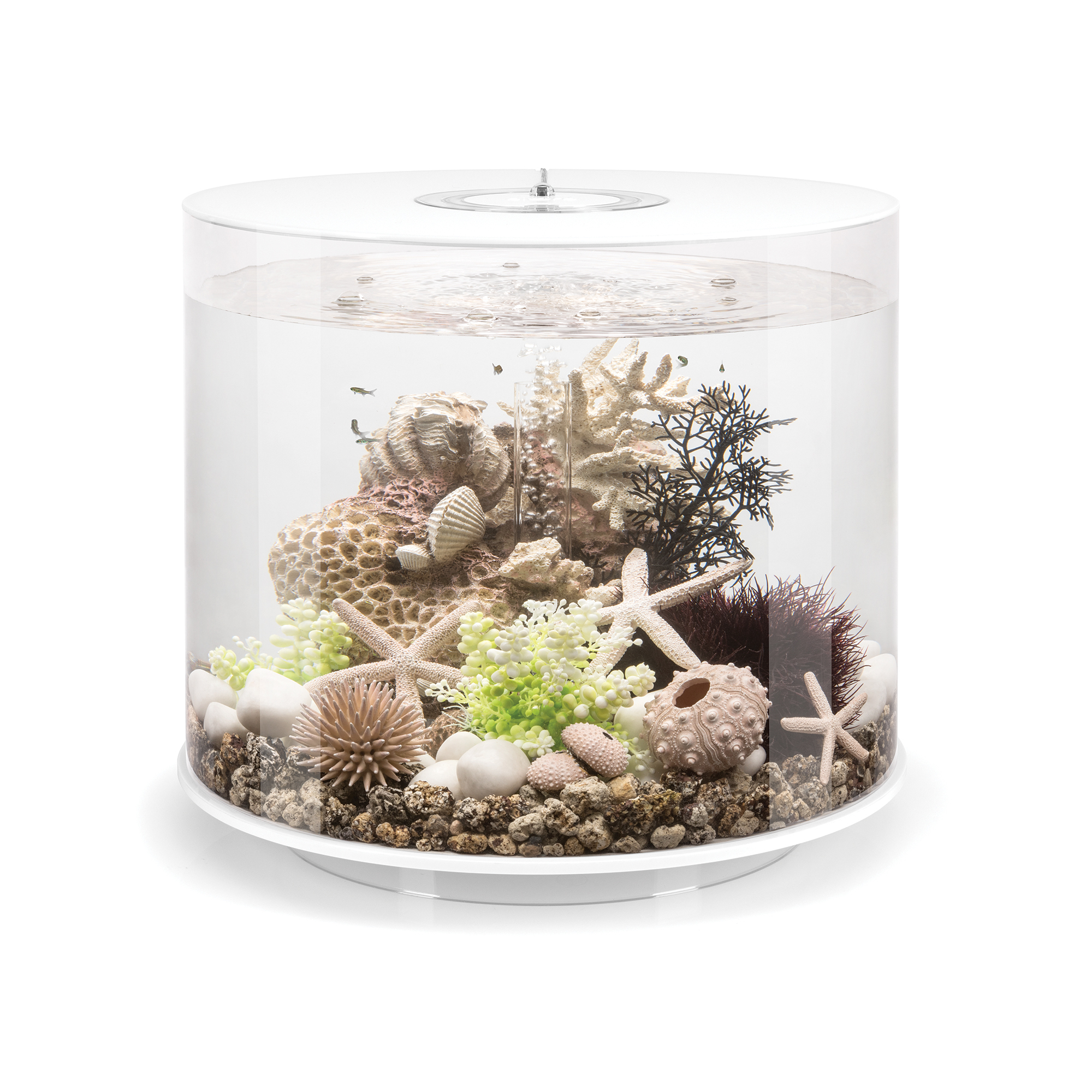 The new OASE biOrb® TUBE aquariums feature a cylindrical-profile with a unique 360° transparent view and an unprecedented array of multi-color LED lighting options with easy remote control customization. (Photo: Business Wire)
