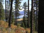Project Ruby Creek Timberland Offering. (Photo: Business Wire)