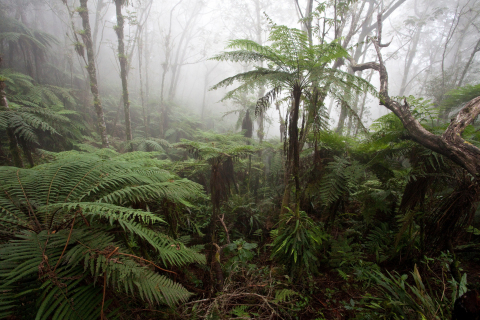 Haiti cloud forest photo by Robin Moore